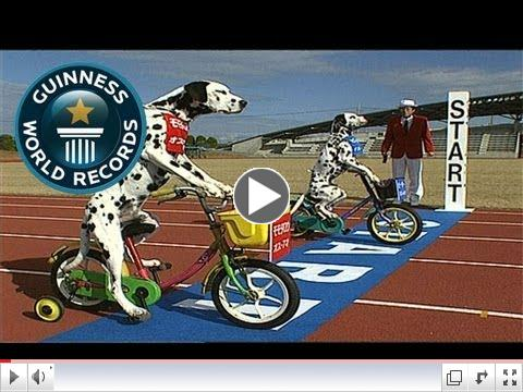 Dogs on tricycles - Guinness World Records Classics