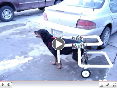 pvc dog wheelchair x-large dog