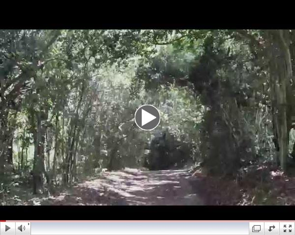 Jungle Gardens Avery Island 5K Route