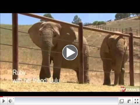 Ruby, African Elephant: In Memoriam