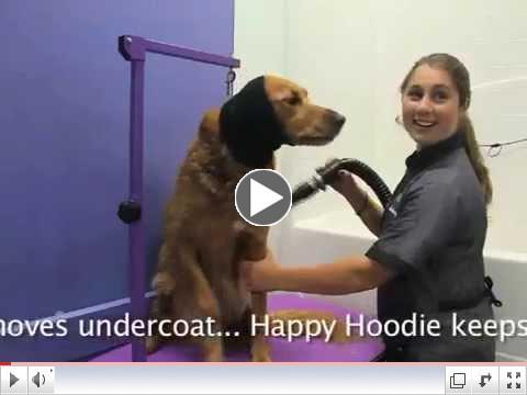 Koby Visits Green Dog Spa...