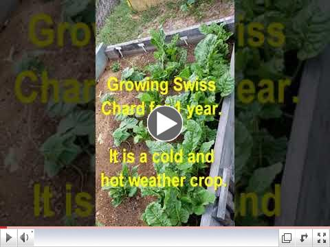 Green Thumb at 60 - Video #1- Intro To My Backyard