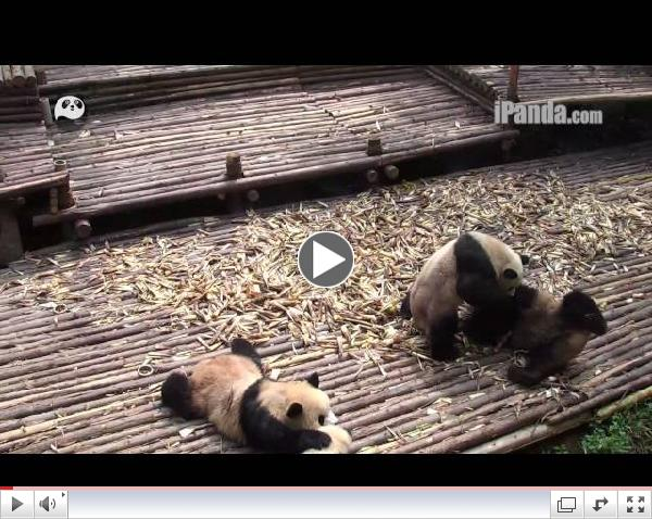NAUGHTY PANDAS PLAY GROUP-FIGHTS! CUTE TROUBLE-MAKERS! PART I