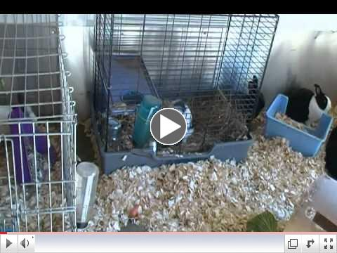 Newest Rabbits in Critter Camp's Bunny Haven, Mrs. Horton & Randall