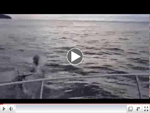 Dolphins and Transient Orcas - November 10, 2013