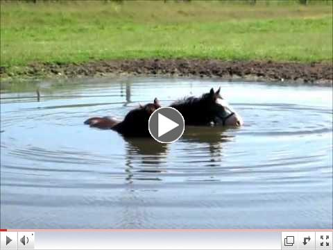 HORSES BLOWING BUBBLES IN THE WATER