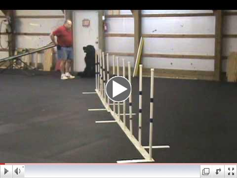 newfoundland dog doing agility weavesRowens Another Day In Paradise, CD, WRD, TDD