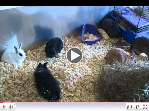 Newest Rescue Bunnies Free Range at Critter Camp