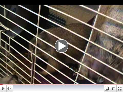 Rescued Prairie Dogs Munch & Fin play & squeak