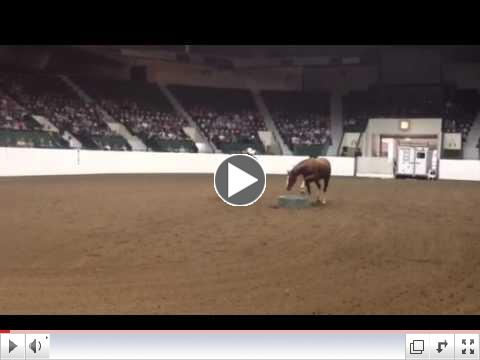 Ryan Rose's Spotlight at the Parelli Horse & Soul Tour