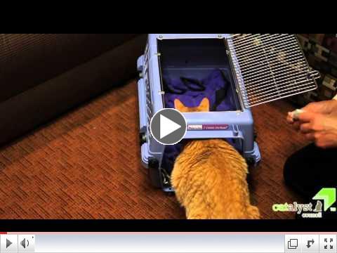 Car Rides & Cats