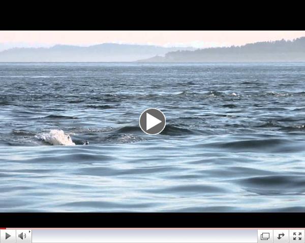 Orca encounter 7/14