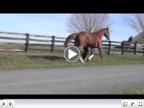 Armicor - 5-year-old German Warmblood