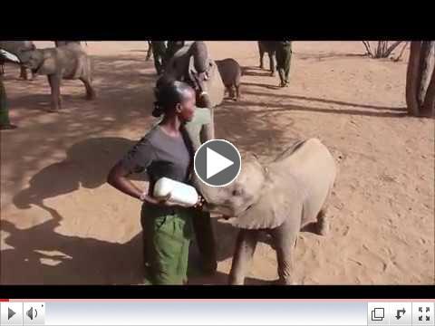 Empowering Samburu Women in Northern Kenya