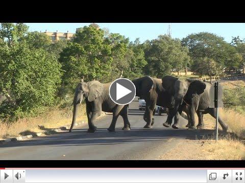 Elephants die after eating plastic bags