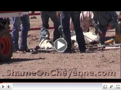 Back-to-Back Steers Injured at Cheyenne Rodeo