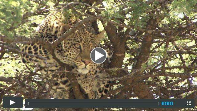 LIFE IN AND AROUND PORINI SAFARI CAMPS (HD VIDEO)