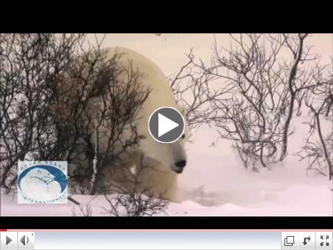 Polar Bears & Climate Change: Dr. Andrew Derocher