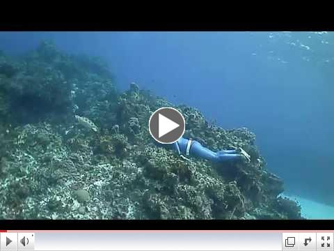 Turtle Escapes From Free Diver