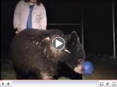 Black Bears: Boo Boo's Rescue
