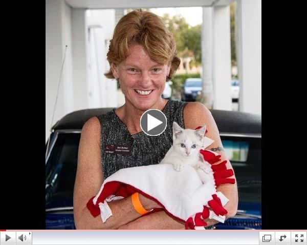 Rosie's Story - Amazing kitten with neurological condition