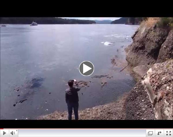 orca whales galiano island june 20th 2014
