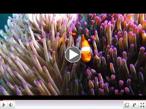 Diving | South Pacific & French Polynesia | Lindblad Expeditions-National Geographic
