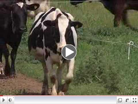 VIDEO: Raw Milk Raid 10 p.m. Report 6-3-10