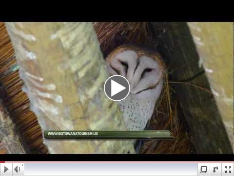 BIRDING ADVENTURES TV BOTSWANA EPISODE 2
