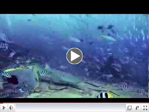 Scuba Dive Asia | Fiji Beqa BIG Shark Dive | credits Doug Wood