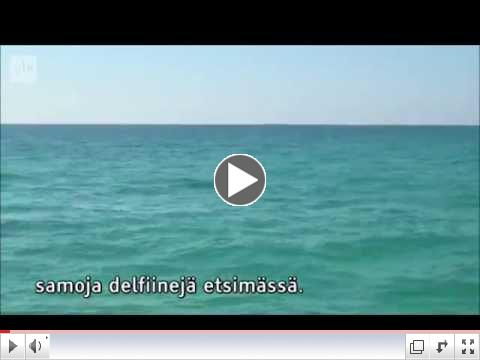 The Florida Keys Dolphin by Olli Kangas