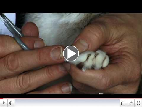 How to Trim Your Cat's Claws - Veterinarian Dr. Christianne Schelling