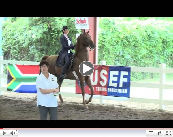 Saddle Seat Invitational II - Saturday Three-Gaited Railwork - Section A