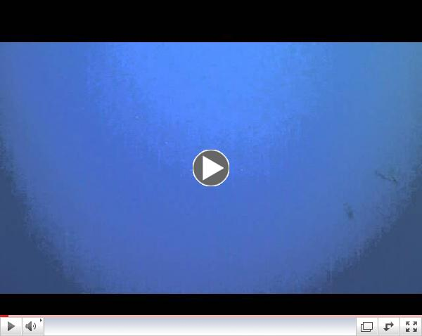 Eagle Ray Flyby