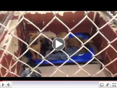 Animal Rescue Aid Pet Beds at Dothan City Animal Shelter (AL) - Video 3