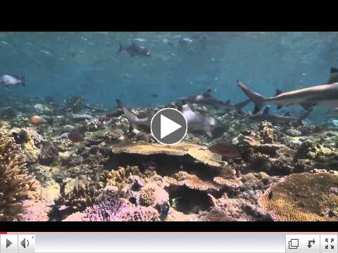 Micronesia Speaks Up to Save Sharks | Pew
