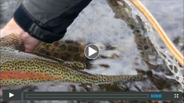 Missoulian Angler Fall Fly Fishing
