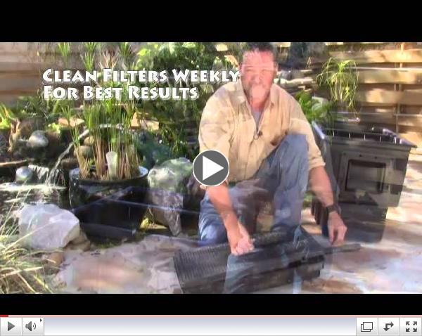 Maintaining Your Backyard Pond