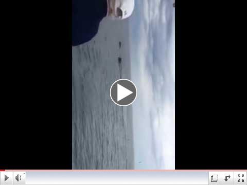 Whales on Jeffries Ledge