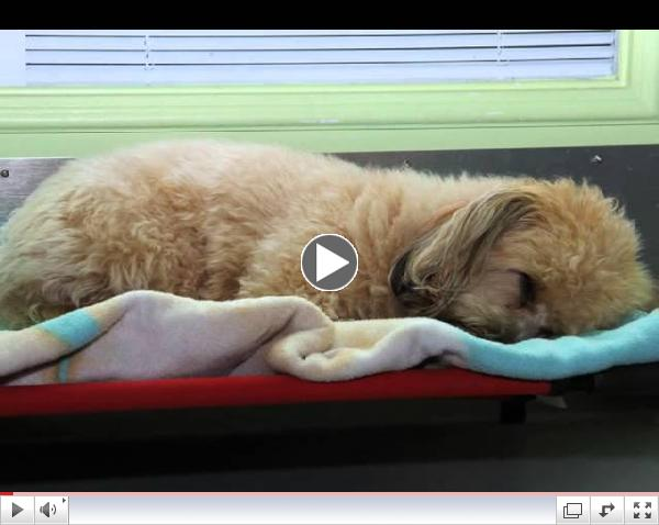 Green Dog Spa Welcome Video
