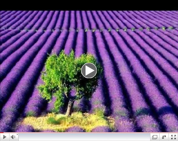 Lavender Fields and Moonlight Sonata (Beethoven)
