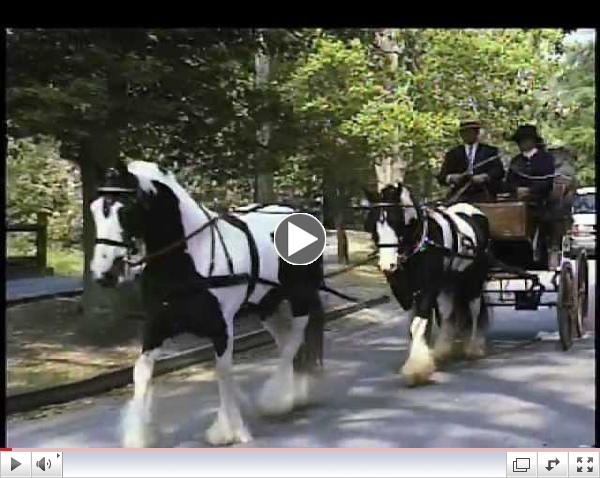 Introduction to the Sport of Carriage Driving
