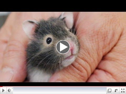 8 Things Your New Hamster is Trying to Tell You