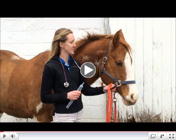Genesee Valley Equine Clinic