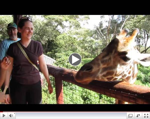 Giraffe Feeding at Giraffe Center, Nairobi, Kenya