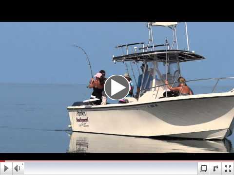 Kristie fights a lemon shark, Florida Keys with Capt. Chris Johnson, SeaSquared Charters 7/9/11
