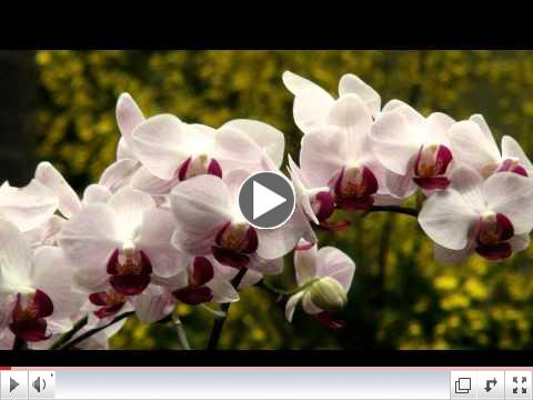 Relaxing Music with best Orchids