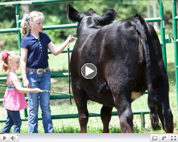 Simmental Field Day Video