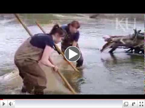 KU undergraduate studies role of minnows in aquatic food chain