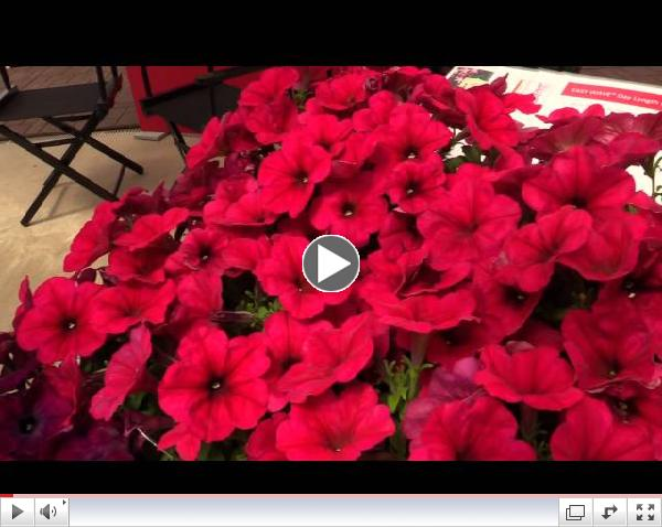 2014 Spring Trials: Wave Petunias & Cool Wave Pansies